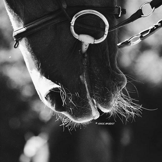 Estremamente cavalli – oradireli DM54